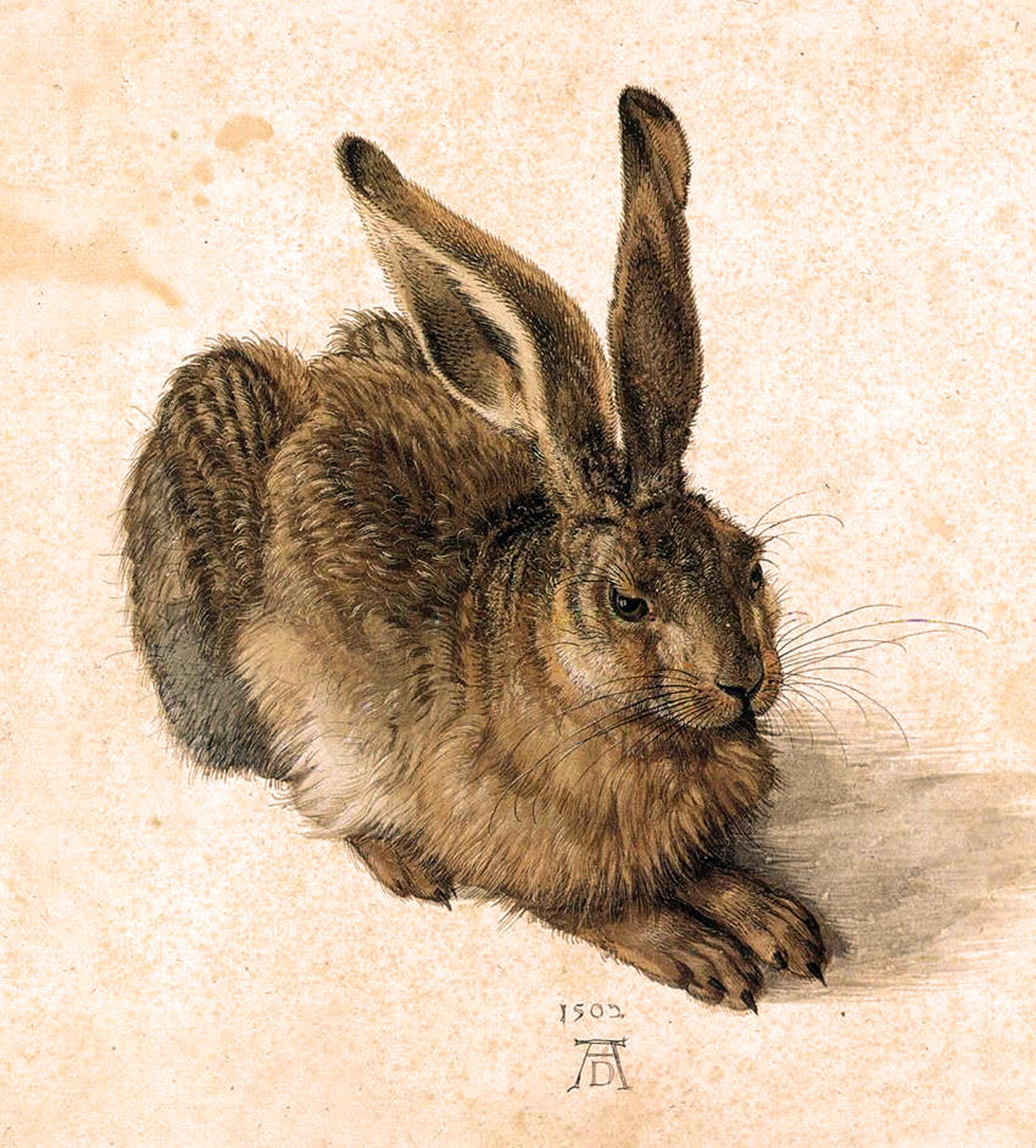 Durer, Albrecht A Young Hare 1502 Watercolor and gouache on paper 25 x 23 cm Graphische Sammlung Albertina, Vienna