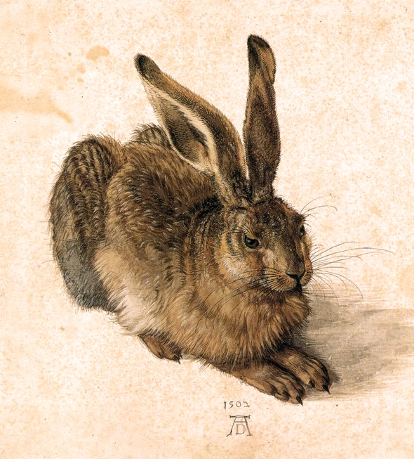 Durer, Albrecht A Young Hare 1502 Watercolor and gouache on paper 25 x 23 cm Graphische Sammlung Albertina, Vienna